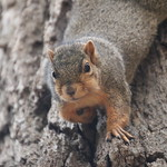 Squirrels in Ann Arbor at the University of Michigan - October 17th, 2018 thumbnail