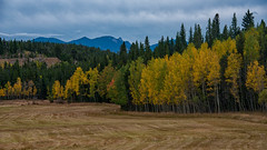 Autumn is Almost Upon Us (RkyMtnGrl) Tags: landscape nature scenery trees pond reflections clouds fence autumn aspens colorado peaktopeak nikon 28300mm