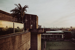 tarrace hill   l  2018 (weddelbrooklyn) Tags: hamburg skyline stpauli feldstrasse bunker club clubs terracehill sonnenuntergang grosstadt grosstadtdschungel dschungel nikon d5200 sundown city bigcity jungle palmen palme palms hamburgerfotofreaks