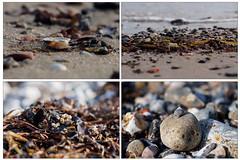 Strandgut an der Ostsee - zoom it!! (mohnblume2013) Tags: bokeh macro standgut ostsee meer strand natur steine muscheln gras