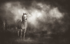 "A horse in the wind ~a perfect symphony.""~ Author Unknown~ (Lorrainemorris) Tags: emotion pony lightroom topaz mood sapia monochrome mono art painterly brown trees mist woods nature 70200mmf28gmoss lorrainemorris photography creative artistic painting irealnd tones textures 70200mm sonyilce7rm2 sony7rm2 wind horse"