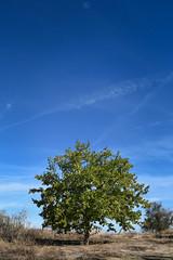 Colours (aitorsnap) Tags: nikon nikond7500 d7500 nikontop nikonphotography nikondslr landscape landscapephotography nature natures naturelife rivasvaciamadrid tree trees arbol arboles árbol sky skyporn bluesky