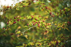 _IMG4068 (angel.doychinov) Tags: autumn m42 helios442 pentax k1 bokeh manualfocus pentaxflickraward