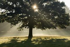 Sunburst (Tracey Whitefoot) Tags: 2018 tracey whitefoot wollaton park hall autumn fall morning nottinghamshire nottingham sunburst tree light rays sunrise october