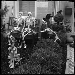 Friendly Halloween Neighbors (Alexander C. Kafka) Tags: halloween horror humor skeletons skulls dogs people blackandwhite