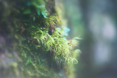 Life (Sarah Fraser63) Tags: mothernature nature trees bark ferns tinyferns tinyplants newzealand nz newzealandforests nztrees tree forest green plant outdoors outside