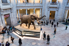 180324 Washington-20.jpg (Bruce Batten) Tags: animals buildings businessresearchtrips locations mammals museums occasions reflections shadows subjects terrestrial trips usa vertebrates washingtondc