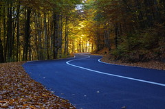 Serpent of light (Baubec Izzet) Tags: baubecizzet pentax road autumn nature light