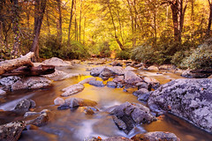 Smokies Golden Stream (Brent McGuirt Photography) Tags: great smoky mountains national park autumn fall leaves stream reflection appalachian color