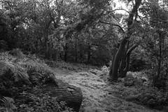 Langdon Hills (dwimagesolutions) Tags: england essex langdonhills autumn bw nikond7200 tamron1750mmf28vc