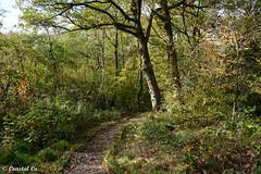 Photo of Woodland Walk