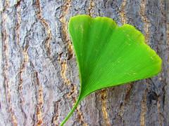(anaritaperalta) Tags: árvore folha verde