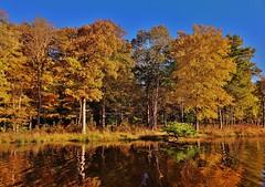 Redington Lake Autumn Scene 2018 (matthewbeziat) Tags: redingtonlake lakeredington princegeorgescounty patuxentresearchrefuge patuxentresearchrefugesouthtract maryland
