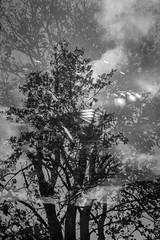 Cheat Shot Fine Art #2 (bnrynlds) Tags: kodak sixtwenty foma 100 cheapshotschallenge sunny16podcast