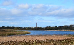 Marton Mere in autumn sunshine (Lancs & Lakes Outback Adventure Wildlife Safaris) Tags: nikon 18300mm blackpool blackpooltower martonmere naturereserve reeds autumn