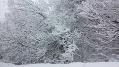 20140228_123035 (andridiana_yay!) Tags: snow smartphone mountains winter cold landscape wanderlust