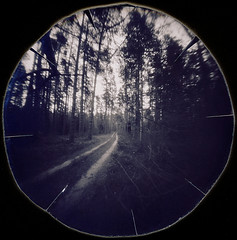 Local road (batuda) Tags: pinhole obscura stenope lochkamera analog analogue lid juice kubus 45cm round circular paper ilford ilfospeed d76 11 9950f landscape nature wood forest pine trees branches neodymium vaišnoriškė senatiltė tauragnai utena lithuania lietuva summer 13