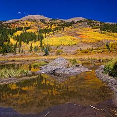 Fall Lodging in Colorado (Fort Photo) Tags: fall autumn nature landscape co colorado lakecounty aspen gold reflection beaver beaverpond lodge mountains mountain square nikon d500 michaelmenefee menefee