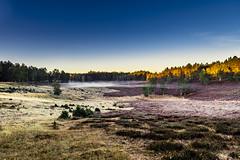 Heidelandschaft im Morgennebel (Iso_Star) Tags: lce6500 sony samyang samyangaf14mmf28 heide heidelandschaft forrest tree