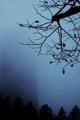 Blue Friday (Darryl Scot-Walker) Tags: fog london architecture londonbuildings canarywharf docklands urban skyscraper tree sky silhouette canon eos5dsr heliosm442 manualfocus blue morning