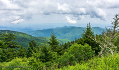 View from the Lodge @ Mt. Mitchell State Park - Burnsville, NC (Paul Diming) Tags: pauldiming 2018asheville stateparks landscape burnsvillenorthcarolina burnsville northcarolina northcarolinastateparks parks park yanceycounty blackmountains drelishamitchell restaurant dailyphoto summer apalachianmountains blackmountainsrange scenic mountmitchellstateparkrestaurant mountmitchellstatepark d7000 yanceycountynorthcarolina statepark mountain unitedstates us