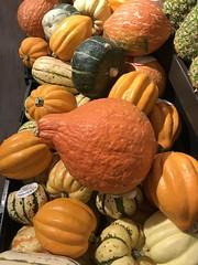 Harvest time, #buttersquash #harvest #harvesttime #pumpkins #foodie #food #foodphotography #foodlovers #halloween #october (Jordon Papanier) Tags: buttersquash harvest harvesttime pumpkins foodie food foodphotography foodlovers halloween october