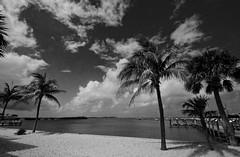 Key West 3882 BW (dweible1109) Tags: skyline skyscape clouds sky ocean gulfofmexico palmtrees scenic landscape superwide 1024mmnikkor beach sand blackwhite bw monochrome d5100 nikon florida keywest