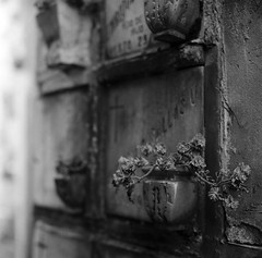 What remains (RoryO'Bryen) Tags: cementerio cementeriocentraldebogotá remains restos afterwards después flowers grim gloomy 120mm kodaktrix rolleiflex28d roryobryen copyrightroryobryen colombia colombie blackandwhite blancoynegro biancoenero pretoebranco bogotá santafédebogotá iso400