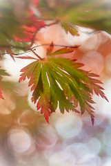 20181014YHF_4425 (yo_hermans) Tags: bokeh tree leave autumn color green red nature outdoors