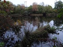 Tenacious tangle (Phil Gayton) Tags: water grass tree plant foliage autumn fall river dart totnes devon uk