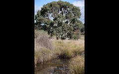lot 87 Flacknell Creek road, Gunning NSW
