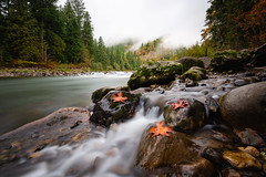 An Autumn Welcoming (John Westrock) Tags: autumn nature leaf river middlefork northbend trees forest clouds longexposure bwnd1000x canoneos5dmarkiii canonef1635mmf4lis washingtonstate pacificnorthwest johnwestrock