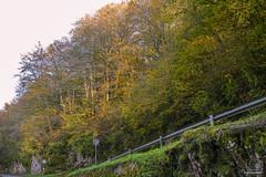 In the woods (cele_mattia) Tags: italia italy autumn barcis friuli fvg autunno dolomiti montagna lago lake nature natura trees leaves alberi foglie