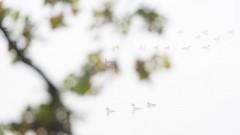 Eichenblätter (IIIfbIII) Tags: mecklenburgvorpommern nature naturephotography naturfotografie nebel neubrandenburg natur bird birdphotography wildlife white wildlifephotography water wild weis wasser wildlifephoto silhouettes see light lake landscape landscapephotography licht duck ente schellente blässhuhn canon cold