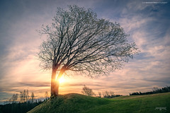 Askim, Norway 0365 - Lonely Tree at Sunset (IVAN MAESSTRO) Tags: lonely tree landscape sunset sunrise askim norway sun sony canon hdr maesstro