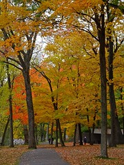 Couleurs d'automne - Fall colors (Jacques Trempe 3,44M hits - Merci-Thanks) Tags: stefoy quebec canada plage jacquescartier automne fall couleur color arbre tree foliage parc park