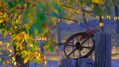 Old Wheel (Tim @ Photovisions) Tags: tree nebraska gate farm cabin forest iron wheel fuji xt2 fujifilm