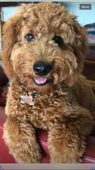 Hi Im Teddy