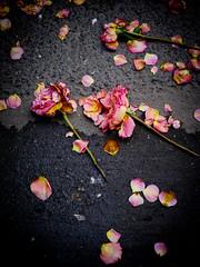 Traces (Calinore) Tags: pavement trottoir relish dechets fleur flower