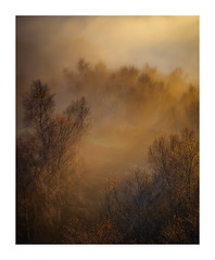 Emerge (Vemsteroo) Tags: fog mist atmospheric sunshine cloudinversion sunset dusk birch trees forest beautiful dramatic autumn fall landscape peakdistrict peaks bolehill quarry canon 5d derbyshire yorkshire outdoors travel explore