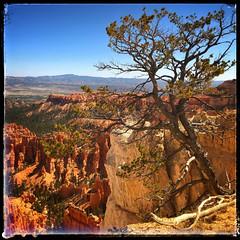 20180921 Bryce Canyon-0261.jpg (Mark Harshbarger Photography) Tags: brycecanyon utah redrocks bryce unitedstates us
