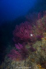 IMG_1303 (davide.clementelli) Tags: diving dive dives padi immersione immersioni ampportofino portofino liguria friends amici underwater underwaterlife sottacqua