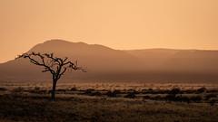 Desert sunrise (802701) Tags: 2018 201809 43 africa damaraland em1 em1markii em1mkii mft micro43 namib namibdesert namibia omd omdem1 olympus olympusomdem1 olympusomdem1mkii september september2018 desert dry fourthirds heat microfourthirds mirrorless naturalworld nature outdoors photography risingsun sand sun sunrise travel travelling