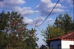 Στον Άγιο Σπυρίδωνα Βοιωτίας, ένα Αυγουστιάτικο απόγευμα του 2018. (Giannis Giannakitsas) Tags: αγιοσ σπυριδωνασ βρανεζι βοιωτιασ vranezi agios spyridonas viotias spiridonas vranesi πελαργοσ