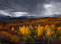 Times of Change (pdxsafariguy) Tags: autumn sunrise sanjuanmountains colorado usa landscape mountains nature yellow aspen tree clouds telluride outdoors alpine orange foliage storm trees shower weather rain dallasdivide tomschwabel