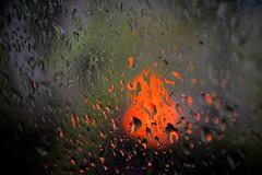 fire and rain (donjuanmon) Tags: nikon donjuanmon macro closeup water droplets rain fire bokeh red black abstract