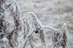 90481595 (aniaerm) Tags: snow ice frost