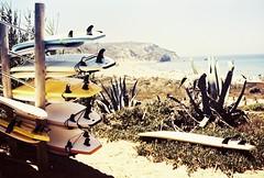 Sagres on film (mariliaapolonio) Tags: 35mm film analog analogica filme nostalgico nostalgic europe europa euro paris berlin sagres portugal germany deutschland alemanha france frança firenze florence florença italia italy amsterdam netherlands paisesbaixos holanda holland pelicola