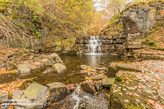 Autumn Waterfall Bowlees Beck Oct 2018 (Richard Laidler) Tags: aonb areaofoutstandingnaturalbeauty autumn autumncolour autumncolours autumntints beck bowlees bowleesbeck bubbles clear color colors fall fine foam froth globalgeopark landscape leaflitter northeastengland northpennines northpenninesaonb pebbles riverbank riverbanks rock rocks splashing stream teesdale trees uk upperteesdale waterfall waterfalls wood wooded woodland woods