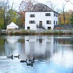 Reflection in Tarrytown thumbnail